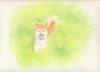 shiba_blog